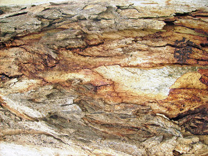 Tree_trunk_surface_background