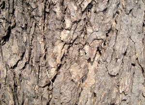 Tree_trunk_texture