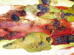Tree_wood
