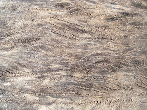Tree_wood_surface