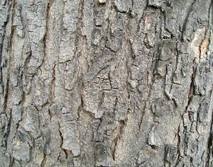 Tree_wooden_texture