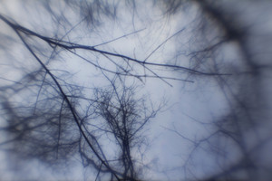 Trees 1 Texture