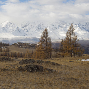Trees and sparse fields at the base of a snowy mountain range