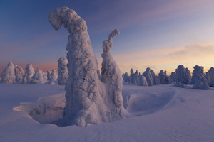 Trees buried in deep snowfall at sunset