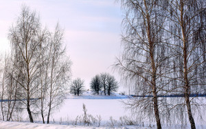 Trees on the snowy field