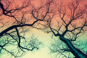 Trees silhouettes against gradient colored sky