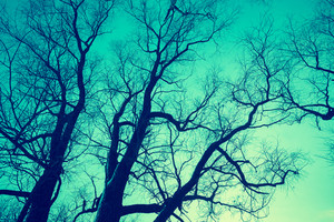 Trees silhouettes against sky