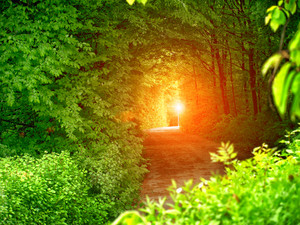 Tunnel from trees and light at the end of tunnel