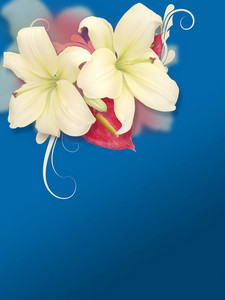 Two Beautiful Flowers Background