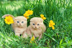 Two cute little kittens sitting in flower meadow