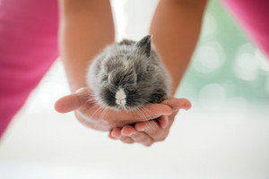 Two hands holding a cute rabbit outdoors