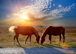 Two horses grazing in a meadow at sunset