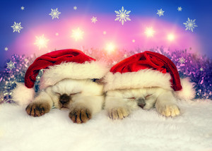 Two kittens dressed in Santa hats