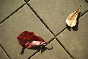 Two leaf on street concrete block