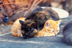 Two little kittens sleeps outdoors