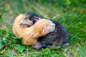Two newborn kitten on the grass