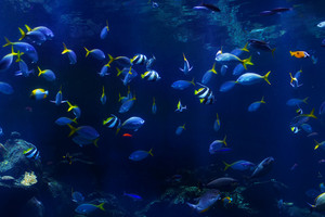 Under Water Fishes - Background