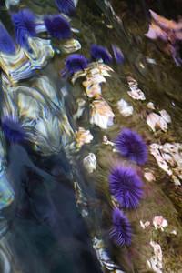 Underwater Coral Background