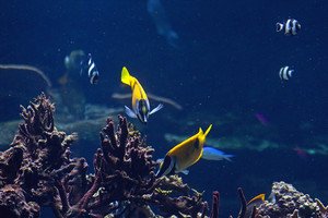 Underwater Fishes Picture
