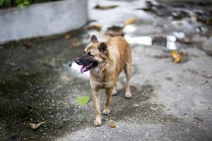 Vagrant dog on sidewalk