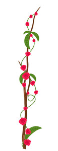 Valentine's Day Roses Flowers Branch