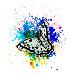 Vector Abstract Illustration With Butterfly