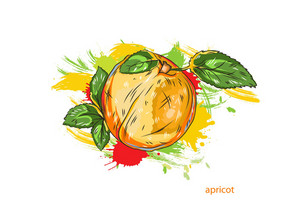 Vector Apricot With Colorful Splashes