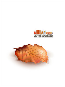 Vector Autumn Background With Leaf