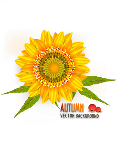 Vector Autumn Background With Sunflower