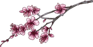 Vector Blossomed Branch