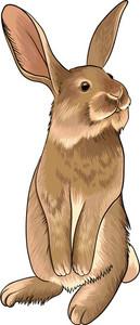 Vector Bunny