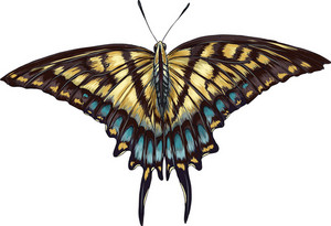 Vector Colorful Butterfly
