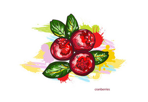 Vector Cranberries With Colorful Splashes