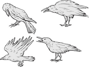 Vector Crows