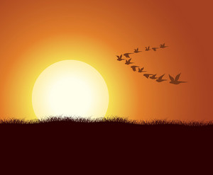 Vector Flock Of Birds With Summer Background