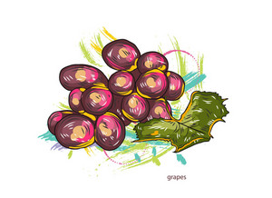 Vector Grapes With Colorful Splashes