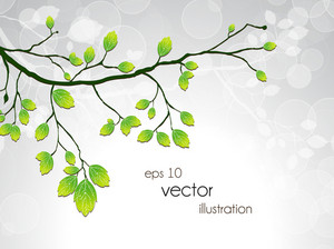 Vector Green Branch With Circles