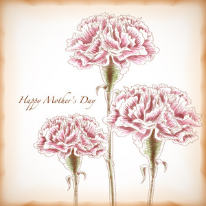 Vector Hand Drawn Carnations