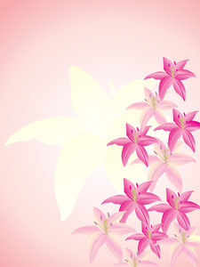 Vector Illustration Of Lily Flower