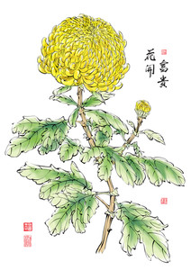 Vector Ink Painting Of Chinese Chrysanthemum. Translation: The Blossom Of Prosperity