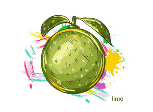 Vector Lime With Colorful Splashes