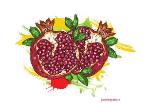 Vector Pomegranate With Colorful Splashes