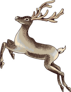 Vector Raindeer