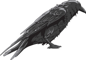 Vector Raven