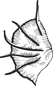 Vector Sea Creature