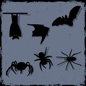 Vector Set Of Spiders And Bats