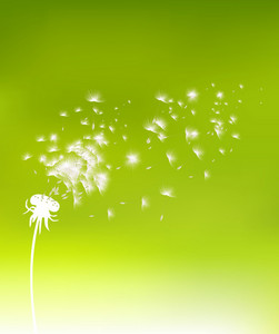 Vector Spring Background With Dandelion
