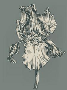 Vector Vintage Hibiscus Illustration