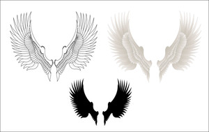 Vectors Wings
