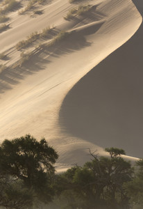 Vegetation over a sunlit sand dune